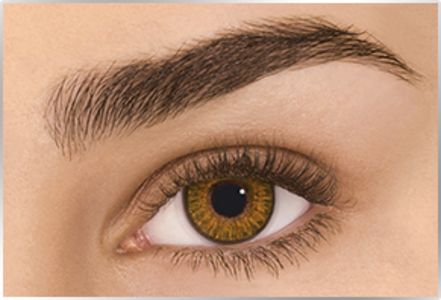 Freshlook Colorblend in Honey (-2.5) - Single Contact Lens