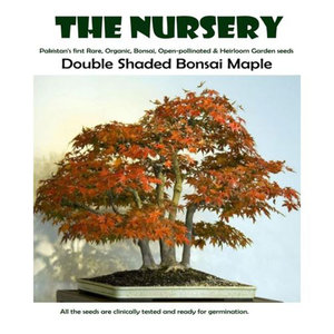 Double Shaded Bonsai Maple Seeds