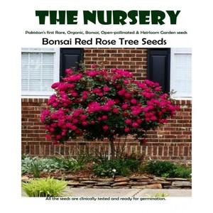 Red Rose Tree Seeds
