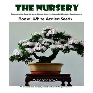 Bonsai White Azalea Seeds