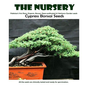 Cypress Bonsai Seeds