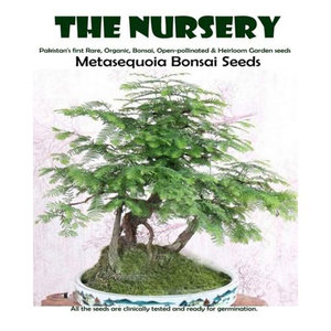 Bonsai Metasequoia Seeds