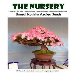 Bonsai Koshiro Azalea Seeds