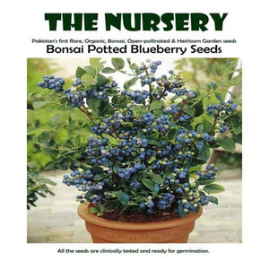 Bonsai Potted Blueberry Seeds