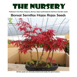 Bonsai Red Semillas Hojas Rojas Seeds