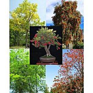 Greenco50+ Fresh Tree Seeds Easy Growing Different Bonsai Plant Flower