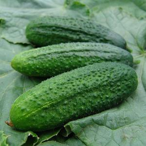 Pack Early Pickling Cornichon Seeds Bonsai Potted Plants Melon Vegetables Garden