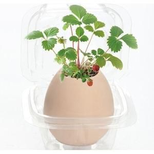 192Pcs Premium Bonsai Seeds With Flowerpot Wild Strawberry Plants Home Office Decors - Beige