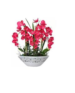 Rare Orchid Bonsai Flower Seeds, Butterfly Red Color