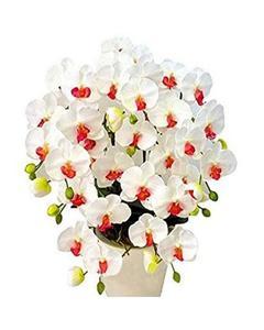 White Phalaenopsis Seeds Bonsai Balcony Flower Orchid Seeds