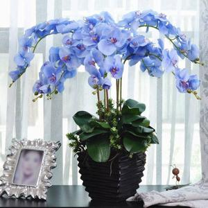 Moth Orchid Seeds Phalaenopsis Seeds Unique 20 Pcs/Bag Home Garden Landscaping Butterfly Seeds Bonsai Living