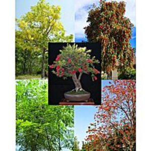 DIY COLLECTION50+ Fresh Seeds Easy Growing Different Trees Bonsai Plant Flower