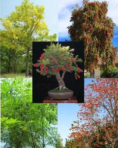 50+ Fresh Seeds Easy Growing Different Trees Bonsai Plant Flower