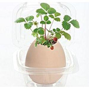 Bluelife192Pcs Premium Bonsai Seeds With Flowerpot Wild Strawberry Plants Home Office Decors - Beige