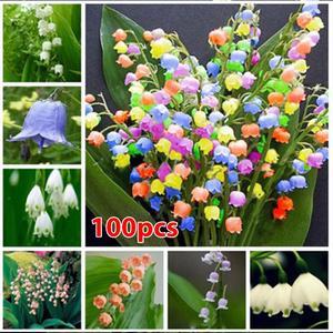 Convallaria Seeds Bell Orchid Seeds RARE 100pcs/Bag Bonsai Beautifying Campanula Flower Seeds Living Landscaping