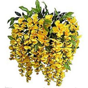 Mahogany SeedsUnique Bonsai Yellow Wisteria Tree Seeds
