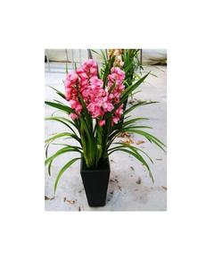 Rare Orchid Bonsai Flower Seeds, Butterfly Orchid, Pink Color