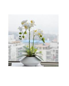 Rare Orchid Bonsai Flower Seeds, Butterfly Orchid, Yellow & White Color
