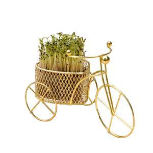Amazing  Bike DIY Design Rare Grass Seeds Planting Home Garden Bonsai Decor Gifts