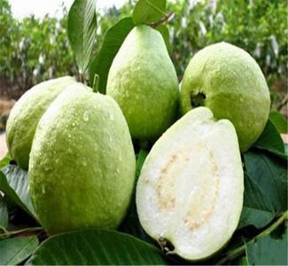 30 Pcs/Bag Guava Seeds, Organic Vegetable Fruit Seeds, Bonsai Guava Tree Plant Pot For Home Garden