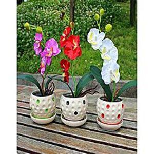Mahogany SeedsBonsai Phalaenopsis Orchid White Red Purple