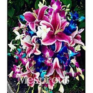 FlairRainbow Lily Seeds - 20Pcs Flower Seeds Rare Color Home Garden Bonsai Dyeing Plant